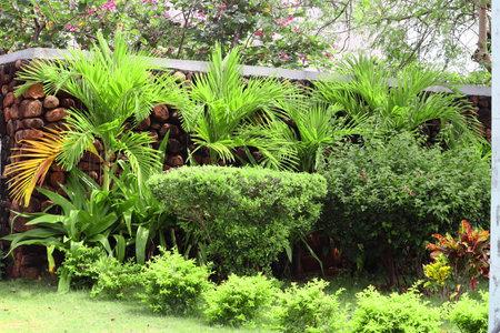 fancy garden built near the wall background. 免版税图像
