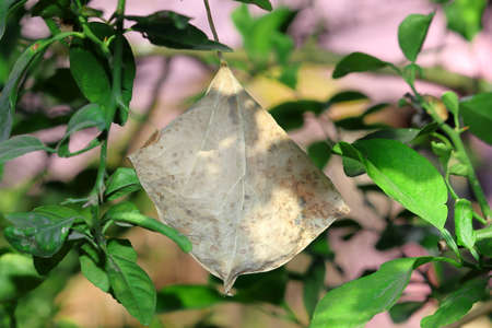 A dry leaf hanging among the bushes in autumn 免版税图像