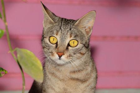 close up  cat  background