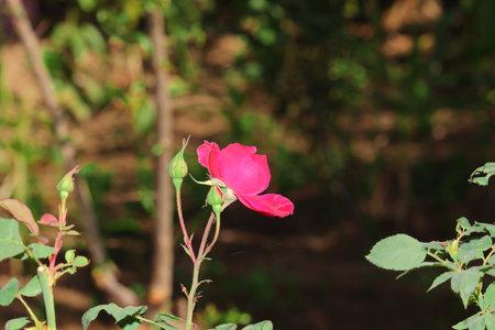 Pink flower  with blur background