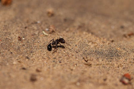 ant lying on the ground in a wounded condition, india . concept for Moving food from one place to another, Hard work, social work, Unity, transportation 免版税图像