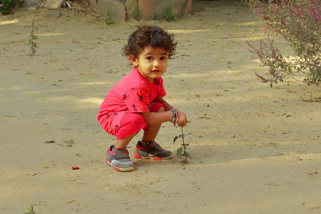 A little boy of Indian origin breaks the leaf of the ayurvedic medicine plant Tulsi, india.concept for Childhood joys, childhood memories, baby's face expressions and Body language , pretty cute kids