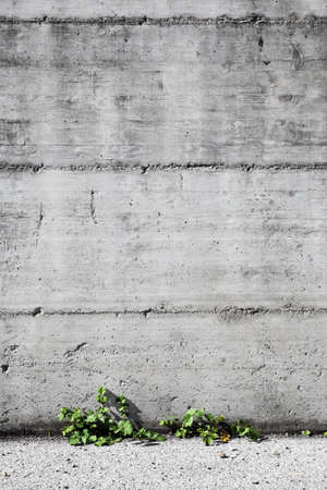Concrete and small plants background photo