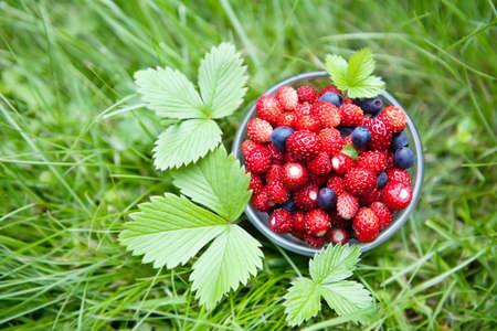 plato del buen comer: El verano y el concepto de comida sana - pequeño vaso lleno de frutos del bosque frescos (fresas y arándanos) sobre un verde césped