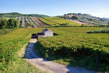 Small farmhouse in the middle of vineyards in Arbruzzo, Italy photo