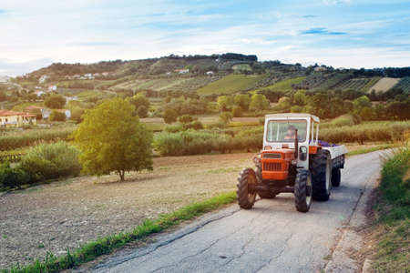 lambrusco: Small red tractor carrying red grapes  Montepulciano  harvest in vineyards of Abruzzo, Italy