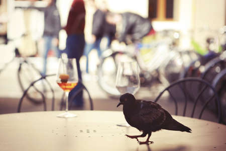 birds eye view: Urban pigeon walking on a street cafe table  Stock Photo