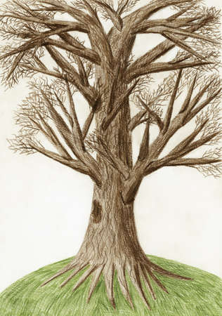 Artistic color pencil drawing  The Tree  photo