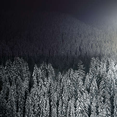 Beautiful winter forest at night, mysterious landscape, kind of a background photo