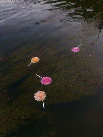 wish: Paper flowers with wishes in the river