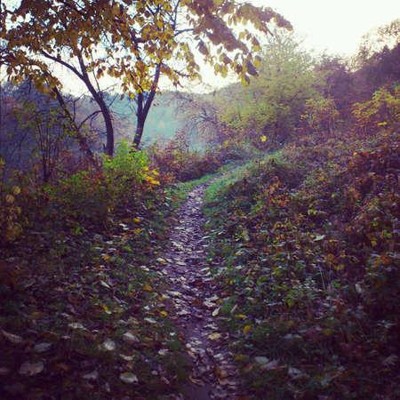 pictoresque: Autumn landscape Stock Photo
