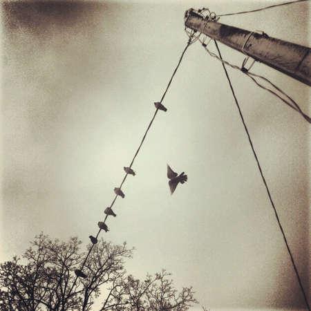 провода: Птицы в небе Фото со стока