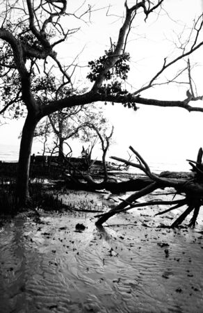 Tree scenery at Kelanang Beach in black and white Stock Photo