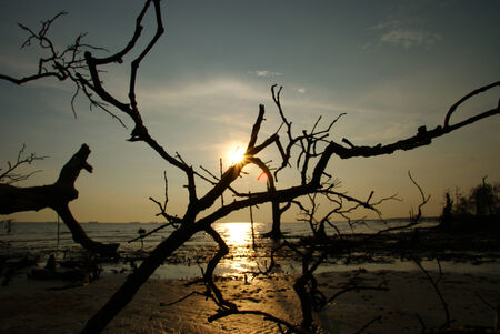 Fallen dead tree at a beach sunset scenery Stock Photo - 24374246