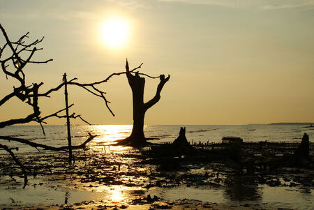 Dead tree at a beach sunset scenery Stock Photo - 24374249
