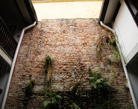 red brick repetition: Brick wall habitate with foliages Stock Photo