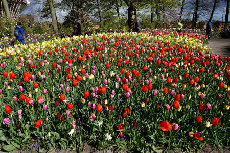 flower bed: Colorful flower bed