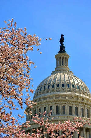 US Capitol in cherry bloom, Washington DC, USA