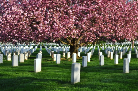 grave site: Arlington National Cemetery, Washington DC, USA