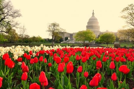 capitol hill: US Capitol in sunrise, Washington DC, USA