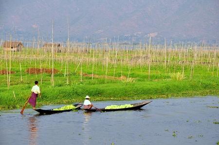 inle: Floating garden in Inle Lake, Myanmar, Burma Stock Photo