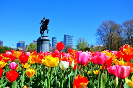 Boston city from tulip garden, Boston Public Garden, USA