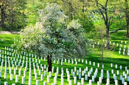 华盛顿特区附近的阿灵顿国家公墓