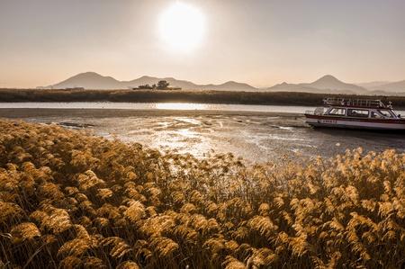 canne: Il campo di canne in splendido tramonto nella baia Suncheonman E 'la più grande colonia di canne in Corea Archivio Fotografico