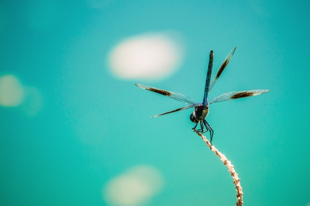 A dragonfly is landing on branch of tree, ready to fly in a sunny day  Stock Photo - 20703339