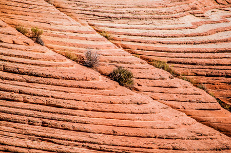 Trees are growing from a rock slope in Grand Staircase-Escalante National Monument, Southern Utah,  USA photo