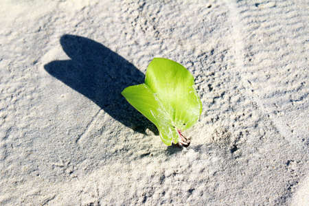 The plants growing on dry sand Stock Photo - 14727662
