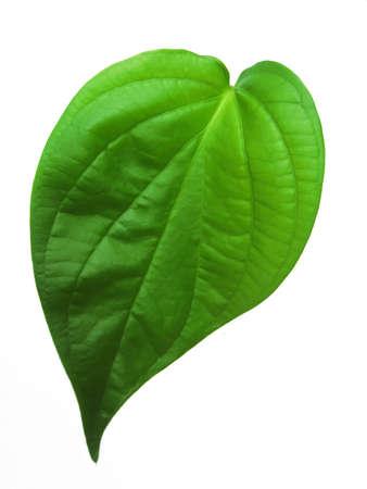 betel leaf isolated on white background