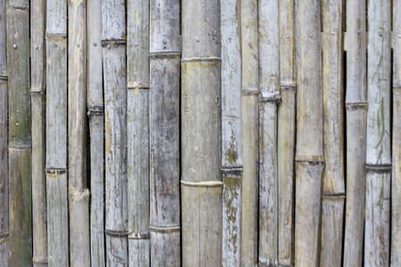 bamboo background Stock Photo - 18663250