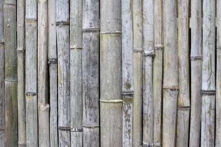 bamboo background Stock Photo - 18663250