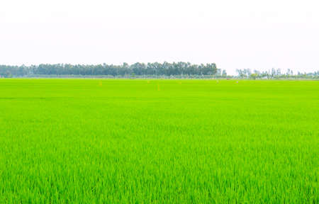 Green field under blue sky  photo