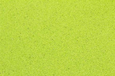 duckweed: Duckweed background