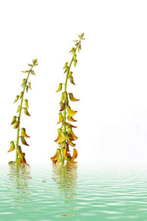 yelllow: Yelllow  flower - close-up view