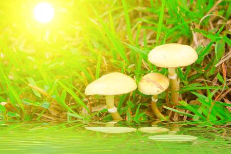 toadstool mushroom in nature photo