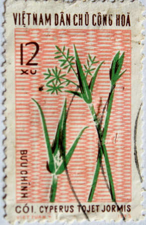 VIETNAM - CIRCA 1973: A stamp printed in Vietnam shows Sedge, circa 1973