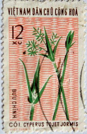 VIETNAM - alrededor de 1973: Un sello impreso en Vietnam muestra juncia, alrededor del año 1973