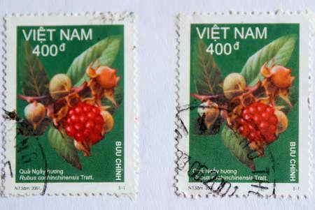 rubus: VIETNAM - CIRCA 2001: A stamp printed in Vietnam shows rubus, circa 2001 Stock Photo
