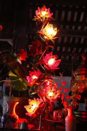 lotus lights photo