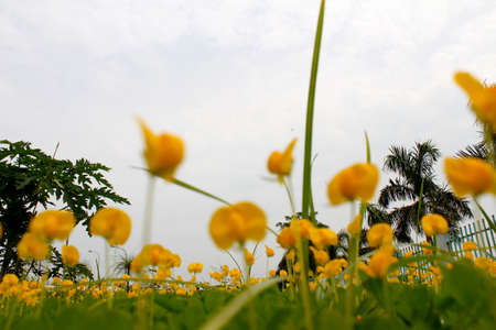 yellow flowers photo