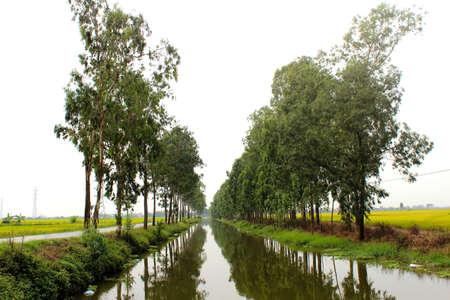 street tree photo