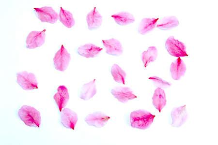 peach petals  Stockfoto