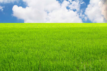 Green paddy and sky photo