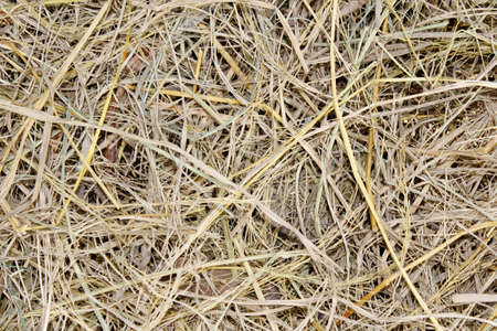 dry straw after harvest photo