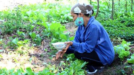 HAI DUONG, VIETNAM, November, 6: Vietnamese woman farmer gardening on November 6, 2013 in Hai Duong, Red River Delta, Vietnam.