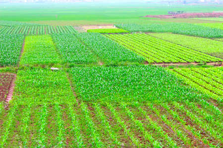 field of vegetables Stok Fotoğraf