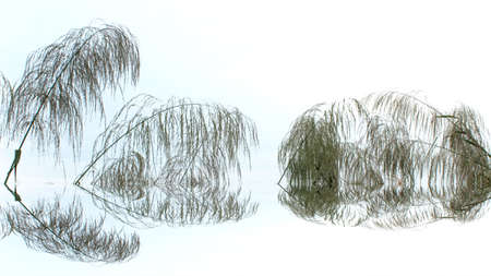grass and sky Stockfoto